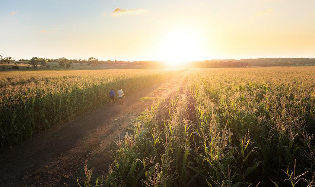 Farmers walking through field