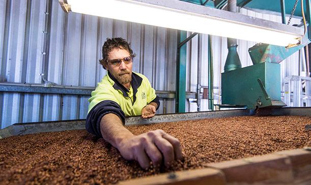 Man sorting seeds